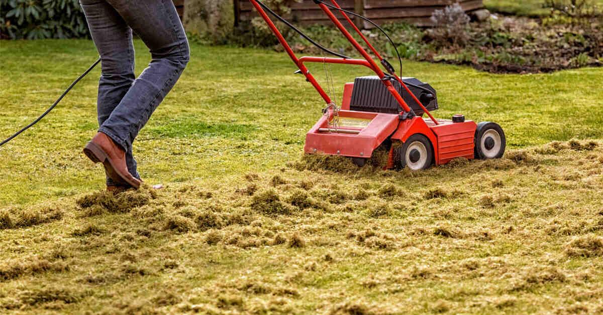Quand tondre la pelouse après la pluie ?