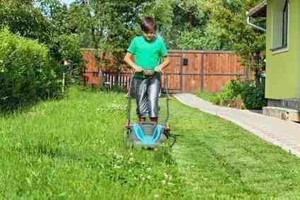 Quand tondre la pelouse matin ou le soir ?