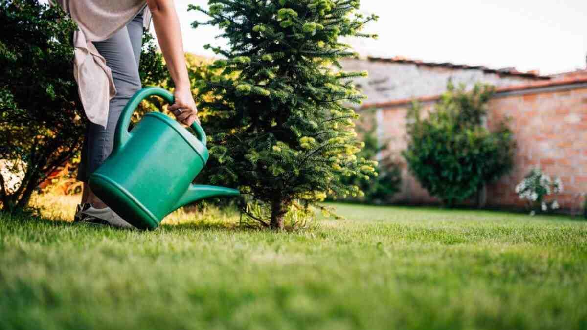 Quelle quantité d'eau pour arroser un arbre ?