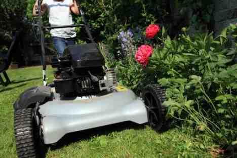 tonde pelouse humide